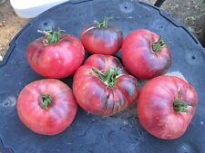 30 BLUE BEAUTY TOMATO SEEDS 2021 (all non-gmo heirloom vegetable seeds!)