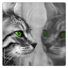 Kühlschrank - Magnet: graugetigerte Katze mit grünen Augen sieht in den Spiegel