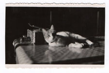 PHOTO ANCIENNE Snapshot Cat Chat Table Jeu de lumière Vers 1950 Animal