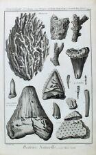 Mineralogie Zahn Fossil Tooth Fisch Fish Poisson Asteria Seestern Koralle