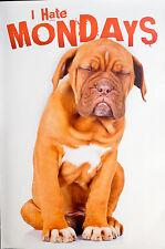 I HATE MONDAYS - DOG POSTER (91x61cm)  NEW LICENSED ART