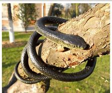 """52"""" Very Real Rubber Toy Fake Snake Safari Garden Prop Joke Prank Halloween Gift"""