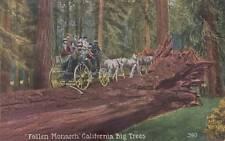 Antique POSTCARD c1907-20 Fallen Monarch California Big Trees Unused 14679