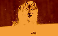 Framed Print - Red & Yellow Vintage Style Alaskan Grey Wolf (Picture Animal Art)
