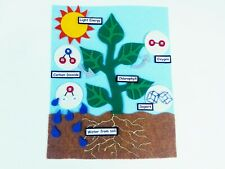 Photosynthesis Felt Set* Homeschool Science/Classroom/Montess ori*