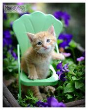 Orange Tabby Cat Kitten on Chair n Garden purple Flowers Art pet photography