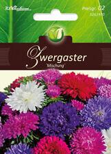 5261970 Zwergaster Mischung Astern Aster  Callistephus   Blumen Samen