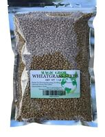 Wheat Grass Seed 1 LB (13,500+seeds) - Guaranteed to Grow !