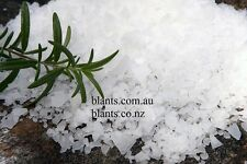 Magnesium Chloride Flakes Naturally Harvested from the Dead Sea 800g Bath Salt