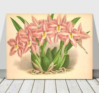 """JEAN LINDEN - Beautiful Pink & White Orchid #42 - CANVAS PRINT POSTER - 16x12"""""""