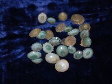 "TWENTY FIVE (25) 1/2 to 1-1/4"" GREEN LIMPET SEA SHELLS CRAFT"