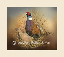 Original Pair of Pheasants Painting by Robert J. May