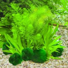 3-4cm Moss Ball Cladophora Live Plant Fish Tank Aquarium Decor Marimo