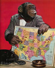 1959 Vintage MONKEY HUMOR Chimpanzee Travel Geography Business Animal Photo Art