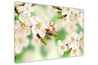 GREEN SPRING BLOSSOM FLOWER CANVAS PRINTS WALL ART PICTURE DECORATION FLORAL ART