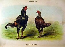 Vintage INDIAN GAMES  CHICKEN POULTRY LITHOGRAPH  1898 RARE Art Print