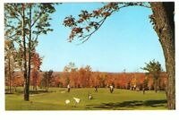 Undated Unused Postcard Laurels Hotel and Country Club Monticello NY Golfing