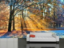 Morning Sun in Winter  Wall  Photo Wallpaper Wall Mural DECOR Paper Poster