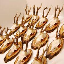 15 Piece Beautiful Deer Antlers Roe Deer Deer Antlers On Acacia Baumschild Decor