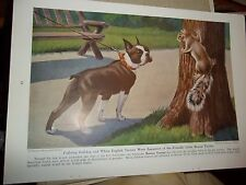 Walter A. Weber Boston Terrier bookplate from 1943 National Geographic Magazine