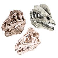 3pcs Realistic Dinosaur Skull Tyranasaurus Rex Sculpture Ornament