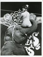 LUCIE ARNAZ SITS ON ELEPHANT TRUNK SMILING CIRCUS OF THE STARS 1977 CBS TV PHOTO