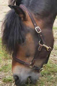 COB . Burgundy-maroon Light-weight Headcollar,   Leather, webbing  & Nylon.