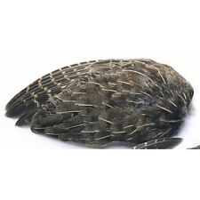 English Partridge Wings for Fly Tying, Partridge Feathers, For Making Flies