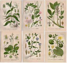 SIX 1904 Antique Prints: WHITE & PINK FLOWERS Botanical German Decor THOME