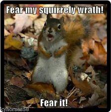 Funny Squirrel Humor Fear My Squirrely Wrath Refrigerator Magnet