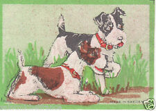 Fox-terrier POIL LONG long hair  ÉTIQUETTE ALLUMETTES OLD MATCHBOX LABEL
