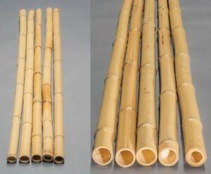 Bambusrohr gelb, Moso Bambus, gebleicht, Durch. 4,5- 6cm, Länge 200cm