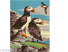 Puffins  Scene  Paint By Number  Refrigerator / Tool  Box  Magnet