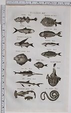 1788 ANTIQUE PRINT FISHES PORCUPINE FISH POGGE REMORA SAW FISH SAW SNAKE TOAD