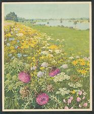"""Verkade's Album """"Onze Groote Rivieren"""" 17. Dijkhelling met bloemen"""