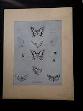 1911 Stampe antiche di Mathurin Méheut Papillons Farfalle