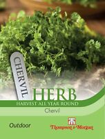Thompson & Morgan - Légumes - Herbe Cerfeuil - 750 Graines