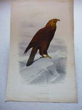 Gravure couleur 19°:oiseaux:  L'aigle royal : oiseaux de proie