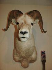 Rocky Mountain Bighorn Ram Sheep Shoulder Mount Taxidermy Log Cabin Decor Dall