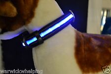 Flashing Dog Collar & D Ring Puppy S-M trixie 13052 Bright Blue high visibility