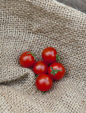 Sweet Aperitif Cherry Tomato Premium Seed Packet - Sweetest Tomato in the World