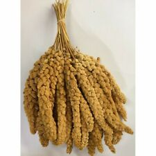 YELLOW MILLET SPRAYS - WHITE 900g (Approx 30 SPRAYS) - GOOD QUALITY - BIRDS