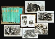 1821 65 plates with animals Smith Thomas le cabinet du jeune Natura lista