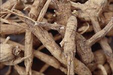 753083 détaillés shot du nord du Wisconsin racine de ginseng a4 photo texture imprimer
