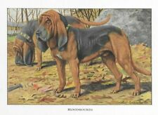 Bloodhound - 1927 Color Dog Art Print - Matted