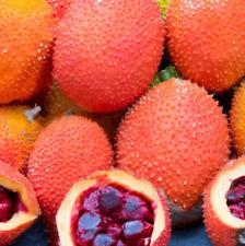 10Pcs Momordica Cochinchinensis Fruit Seeds Rare Kind Bonsai No GMO Tasty