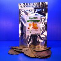 "50 pcs 4""~7"" Tantora Catappa Leaves -Indian Almond Leaf for Shrimp Betta Discus"