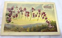 1910 Language of Flowers Souvenir Postcard Violet Faithfulness