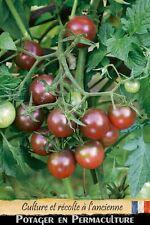 Tomate cerise « Brown Berry » noire/rouge 20 graines méthode Bio (seed Tomato)