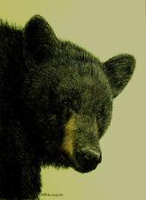 Original Pastel Drawing Black Bear vignette Bruin Sally Porter Wildlife Art